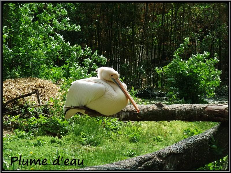Zoo de doue la fontaine for Zoo haute savoie